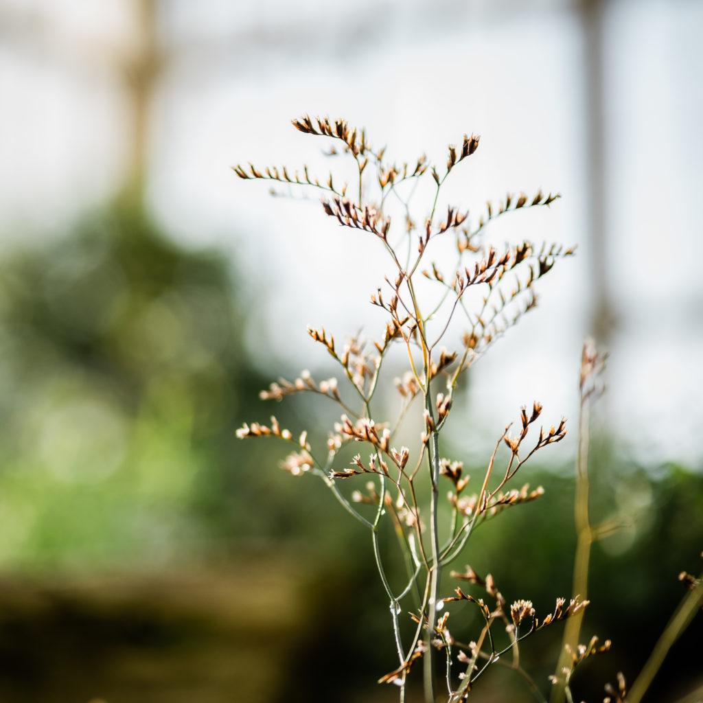 Gras im Botanischen Garten zu Berlin